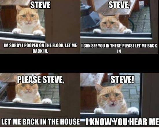 angry-cat-meme