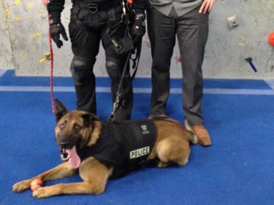derpy-police-dog