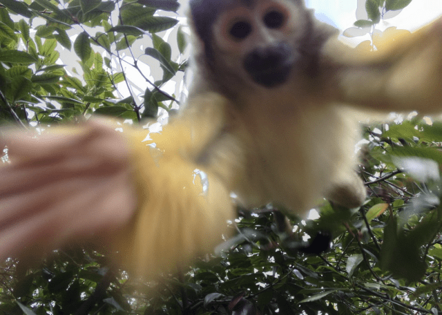 monkey-taking-selfie-in-tree