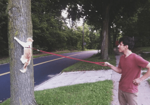 walking-cat-on-leash-up-tree