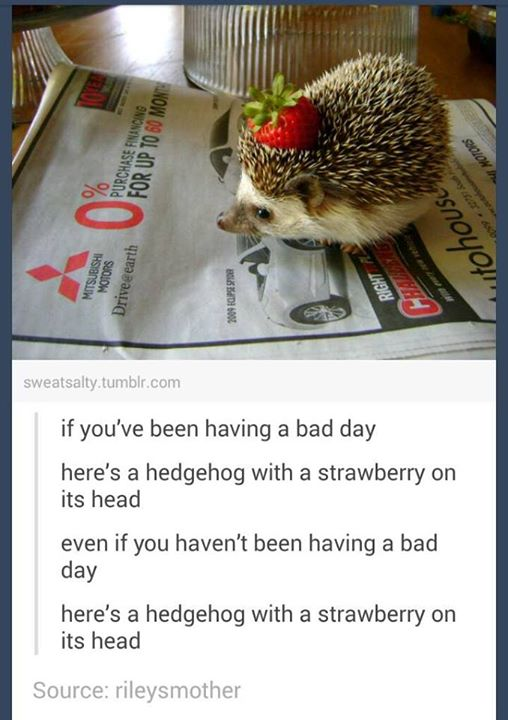 Some advice if you're having a shitty day. Tumblrs-greatest-hits-hedgehog-strawberry