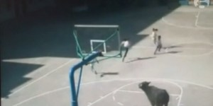 Recess Was Ruined At A School In China When An Escaped Buffalo Tried To Maul All The Kids