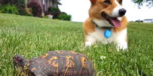 Dog's Chillaxing When His Life Gets Flipped-Turned Upside Down, Realizes That Rock Is A Turtle, Just Can't Even