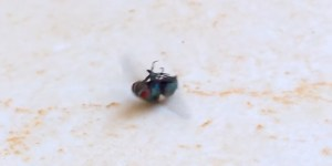 This Fly Is A Hundred Times Better Breakdancer Than You Will Ever Be