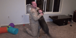 German Shepard Showers Military Bro With Love When He Returns Home From Deployment