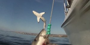 Watch This Shark Photobomb Another Shark Because Sharks Do Whatever The Hell They Want Now