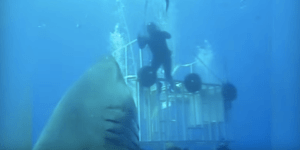 Out-Of-Cage Diver Encounters A 20-Foot Great White Shark And The Ocean Probably Got A Little More Human Urine