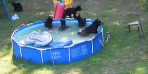 Little Kid Has A Meltdown When She Finds 6 Bears In The Family Pool Ripping Up Her Float Toys