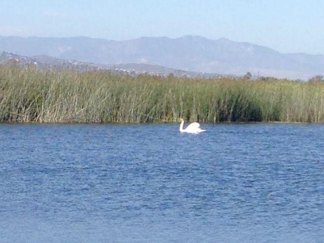 Vta Swan