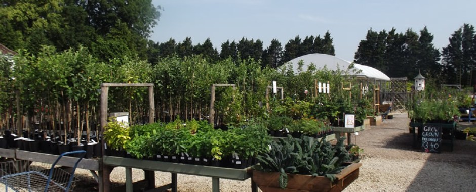 Wide selection of potted Heritage trees still available