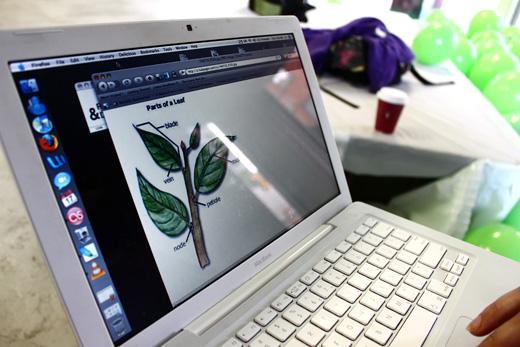 a plant leaf
