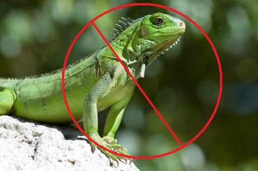 no reptiles allowed