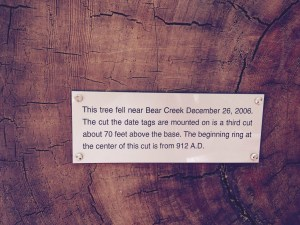 Statement about age of redwood tree