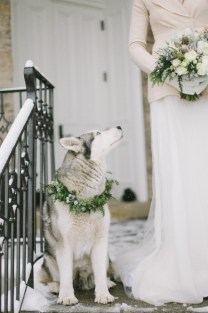 husky-vinterbrud-vinterbryllup