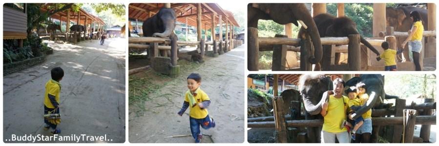 ปางช้างแม่สา,เด็ก,เชียงใหม่,พาลูกเที่ยว,พาครอบครัวเที่ยว,pantip,รีวิว