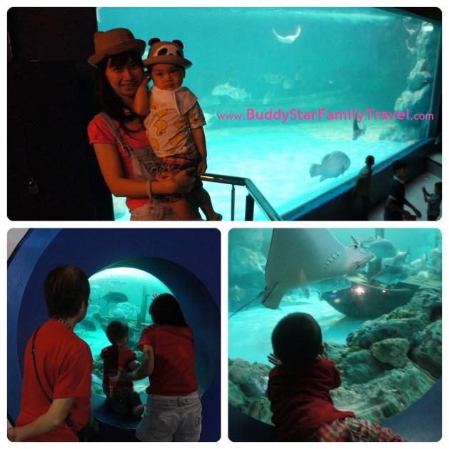 พาลูกเที่ยว, ที่เที่ยว,เด็ก, อควาเรียม,อุโมงค์ปลา,บางแสน