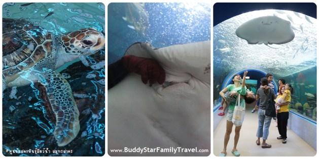 ที่เที่ยว,เด็ก,กรุงเทพ,อควาเรียม,สมุทรสาคร