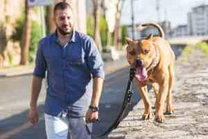 pitbull dog endurance supplement