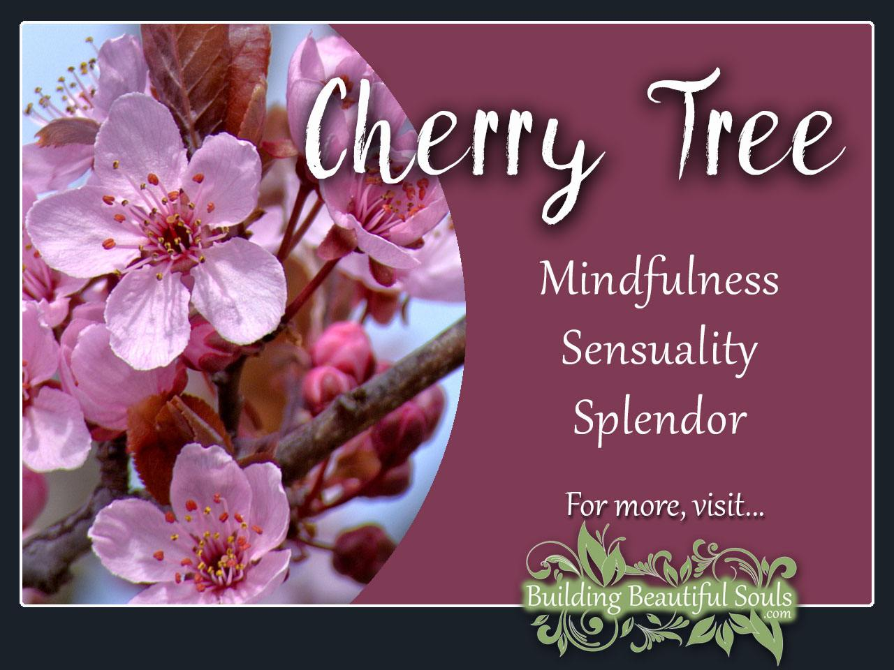 Comfy Cherry Tree Meaning Symbolism Flower Meanings Cherry Tree Meaning Symbolism Tree Symbolism Meanings Stella Cherry Tree Problems Stella Cherry Tree Colorado houzz-03 Stella Cherry Tree