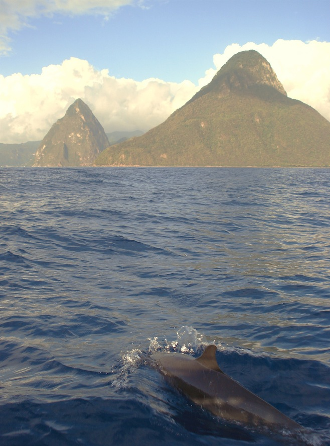 St. Lucia Dolphins