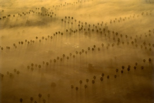 08._Palm_Trees___Fog__Los_Angeles__1993
