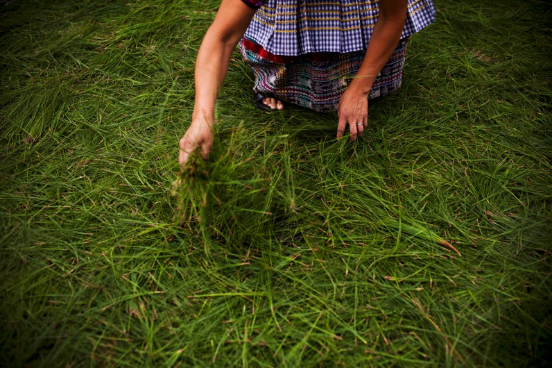 A woman scatters pine needles on the road before a Catholic procession, in Antigua, Guatemala.