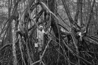 The children that live in the Reserve are extremely agile. They effortlessly climb from branch to branch and navigate through the infinite spider web of roots. Their spryness makes them very efficient shell pickers. Cayapas Mataje Reserve, Ecuador. 2014.