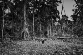 A baka pygmie man walks through an area devastated by the chopping down of trees by the timber industry. Ndjibot, Dja Faunal Reserve.
