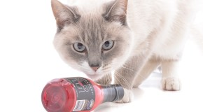 'Cat wine' maker expands its pawprint
