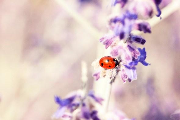 Ladybug by Dominique Knobben
