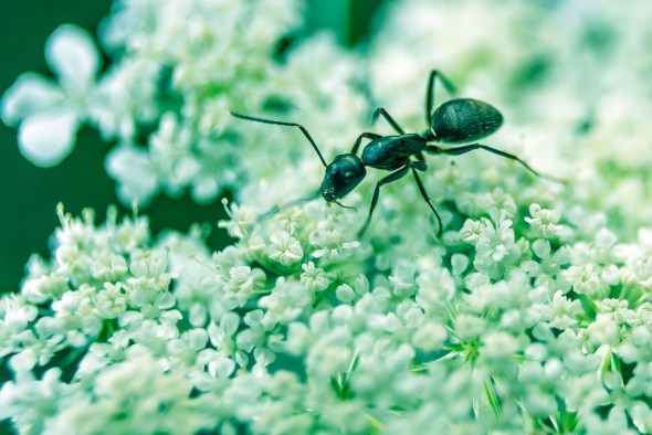 ants by David Higgins