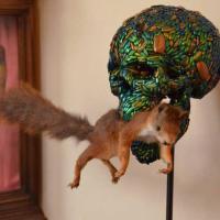 Gatti morti in mostra a Firenze?
