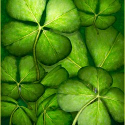 Four Leaf Clover Tubes Butterflywebgraphics