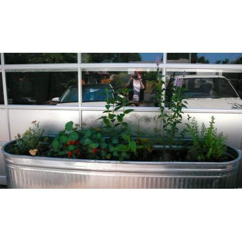 Medium Crop Of Herb Garden Trough