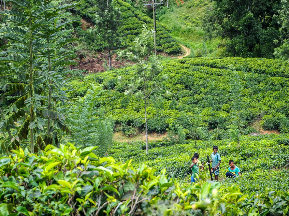 Kids in the tea plantations, Sri Lanka, 5 tips to stay healthy whilst travelling, www.by-rosie.com