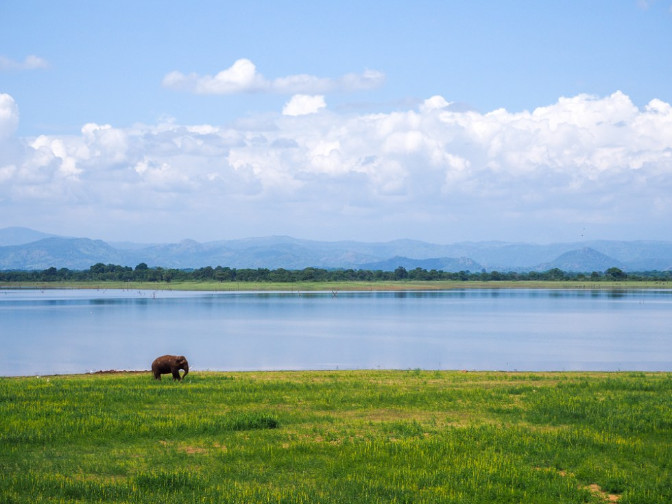 Rambo the Elephant, Uda Walwe National Park, 5 tips to stay healthy whilst travelling, www.by-rosie.com