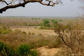 Viewpoint from the hotel at Mole National Park, Ghana