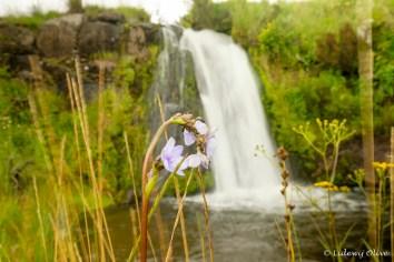 Kitulo NP: waterfall