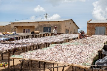 Drying fish in CapeMclear