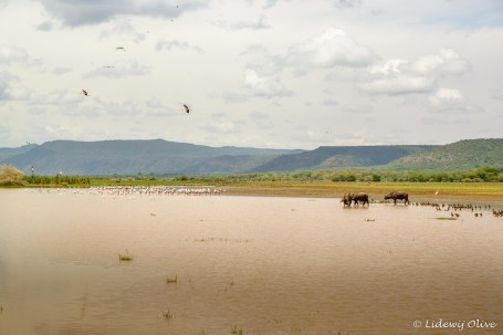 Beautiful lake in Manyara NP