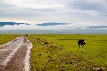 Scenery in Ngorongoro
