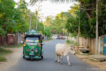 Tuktuk and the holy cow