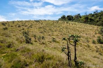 Horton plains NP