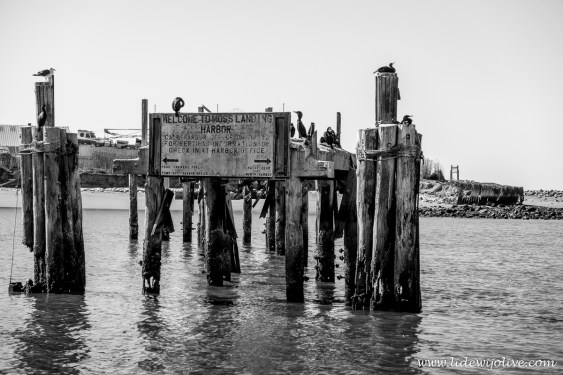 Welcome to moss landing harbor