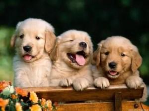 Raças de cães para crianças