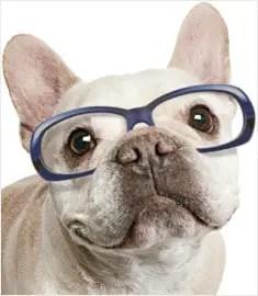 Doenças oculares nos cães