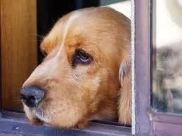 Dicas para diminuir a ansiedade do seu cão