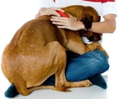 Dicas para ajudar cães com medo de estrondos
