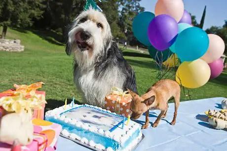 Como calcular a idade do cachorro
