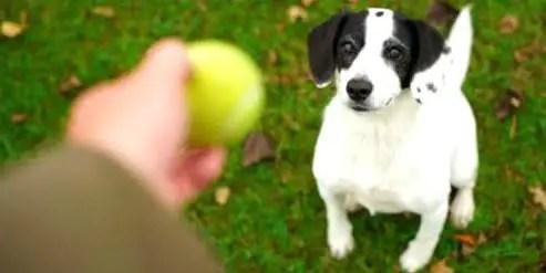 Dicas de brincadeiras para cachorros